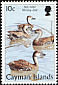 West Indian Whistling Duck Dendrocygna arborea  1998 Birds