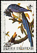 Black-throated Magpie-Jay Calocitta colliei