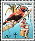 Black-winged Red Bishop Euplectes hordeaceus