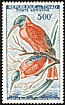 Northern Carmine Bee-eater Merops nubicus  1961 Birds