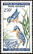 Malachite Kingfisher Corythornis cristatus  1963 Birds