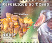 Shoebill Balaeniceps rex  1998 Mushrooms