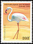 Greater Flamingo Phoenicopterus roseus  1999 African birds