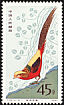 Golden Pheasant Chrysolophus pictus  1979 Golden Pheasant