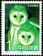 Eastern Grass Owl Tyto longimembris  1995 Owls