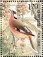 Snowy-cheeked Laughingthrush Garrulax sukatschewi  2008 Birds Sheet