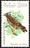 Crested Serpent Eagle Spilornis cheela  1967 Taiwan birds