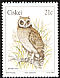 Marsh Owl Asio capensis