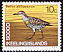 Buff-banded Rail Gallirallus philippensis  1969 Definitives