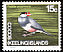 Java Sparrow Lonchura oryzivora  1969 Definitives