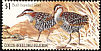 Buff-banded Rail Gallirallus philippensis  1985 Birds