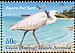 Pacific Reef Heron Egretta sacra  2003 Shoreline birds Strip
