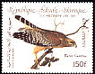 Red-shouldered Hawk Buteo lineatus  1985 Audubon