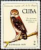 Cuban Pygmy Owl Glaucidium siju