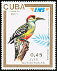 West Indian Woodpecker Melanerpes superciliaris