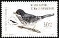 Cyprus Warbler Sylvia melanothorax