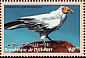 Egyptian Vulture Neophron percnopterus  2000 Birds Strip