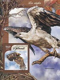 egyptian falcon bird