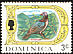 Scaly-naped Pigeon Patagioenas squamosa  1969 Definitives