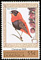 Northern Red Bishop Euplectes franciscanus  1999 Christmas