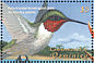 Ruby-throated Hummingbird Archilochus colubris  2001 Tropical fauna and flora