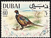 Common Pheasant Phasianus colchicus  1968 Arabian Gulf birds
