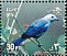 Blue-grey Tanager Thraupis episcopus  2001 Festivals