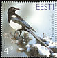 Eurasian Magpie Pica pica  2003 Bird of the year
