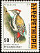 Abyssinian Woodpecker Dendropicos abyssinicus  1998 The Golden-backed Woodpecker
