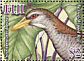 Bar-winged Rail Nesoclopeus poecilopterus �  2007 Bar-winged Rail Sheet