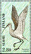 Eurasian Curlew Numenius arquata  1996 Shorebirds Sheet