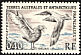 Brown Skua Stercorarius antarcticus  1959 Definitives