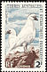 Black-faced Sheathbill Chionis minor  1960 Definitives