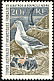 Black-browed Albatross Thalassarche melanophris  1968 Definitives