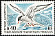 Antarctic Tern Sterna vittata  1976 Definitives