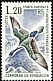 Kerguelen Shag Leucocarbo verrucosus  1976 Definitives
