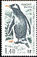 Gentoo Penguin Pygoscelis papua  1976 Definitives