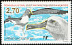 Grey-headed Albatross Thalassarche chrysostoma  1998 Albatross