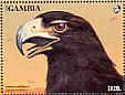 Verreaux's Eagle Aquila verreauxii