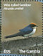 Wire-tailed Swallow Hirundo smithii