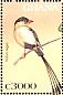 Shaft-tailed Whydah Vidua regia