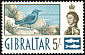 Blue Rock Thrush Monticola solitarius  1960 Definitives