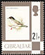 Sardinian Warbler Sylvia melanocephala  1977 Definitives