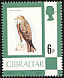 Black Kite Milvus migrans  1977 Definitives