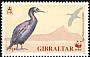 European Shag Phalacrocorax aristotelis  1991 WWF