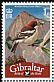 Woodchat Shrike Lanius senator  2008 Bird definitives