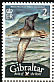 Balearic Shearwater Puffinus mauretanicus  2008 Bird definitives