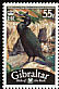European Shag Phalacrocorax aristotelis  2008 Bird definitives