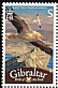 Egyptian Vulture Neophron percnopterus  2008 Bird definitives