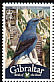 Blue Rock Thrush Monticola solitarius  2008 Bird definitives